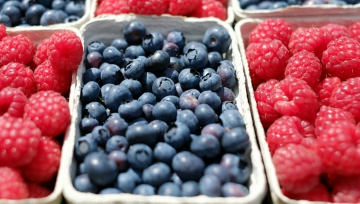 berriesfruitfoodsummerkidseateatingnutritionfarmfeaturedimage