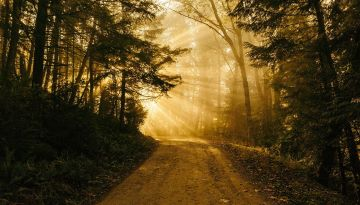 A trail in a forest surrounded by trees. Sunbeams shine brightly.